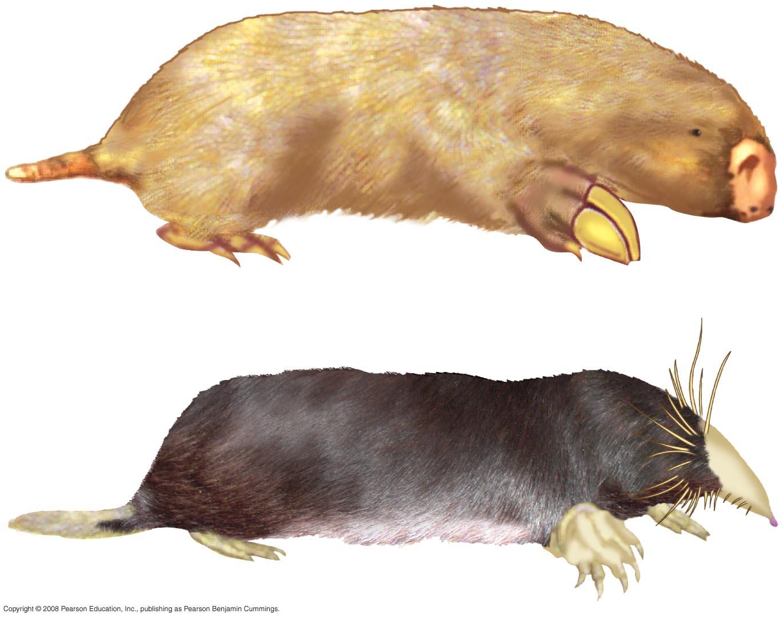 relationship between divergent evolution and homologous structures