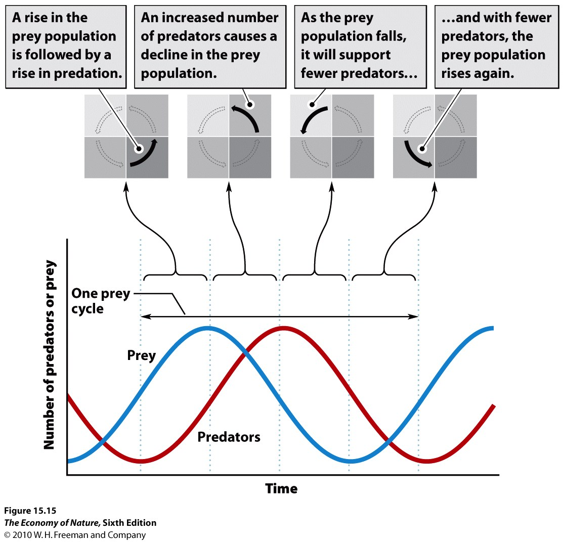 Predatorprey – Predator Prey Worksheet