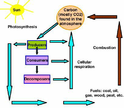 Ecosystemsml carbon cycle over geologic and historical time how has the rate flux of fossil fuel burning compared with the rate of fossil fuel formation ccuart Image collections