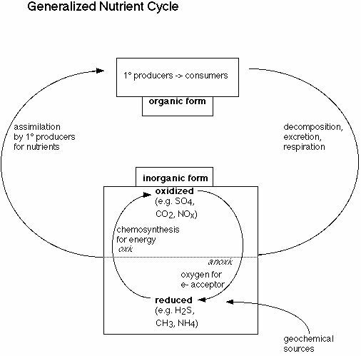 the chemosynthesis cycle Chemosynthesis is the conversion of carbon (usually carbon dioxide or  mating  habitats red crabs and analyzing the reproductive cycles of the seep mussels.