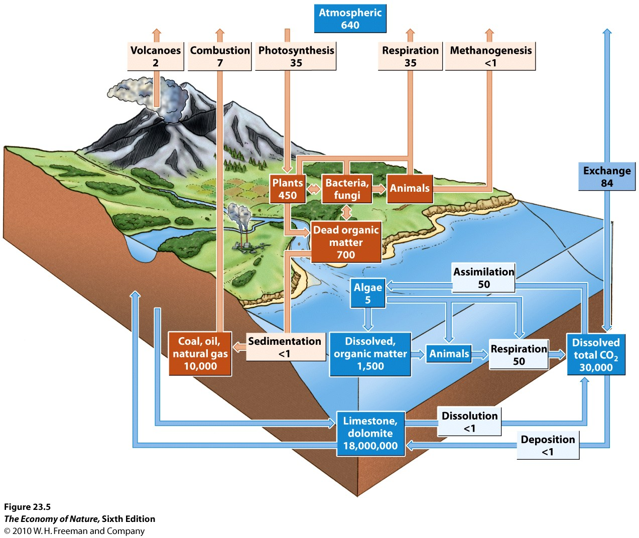 Ecosystems Html